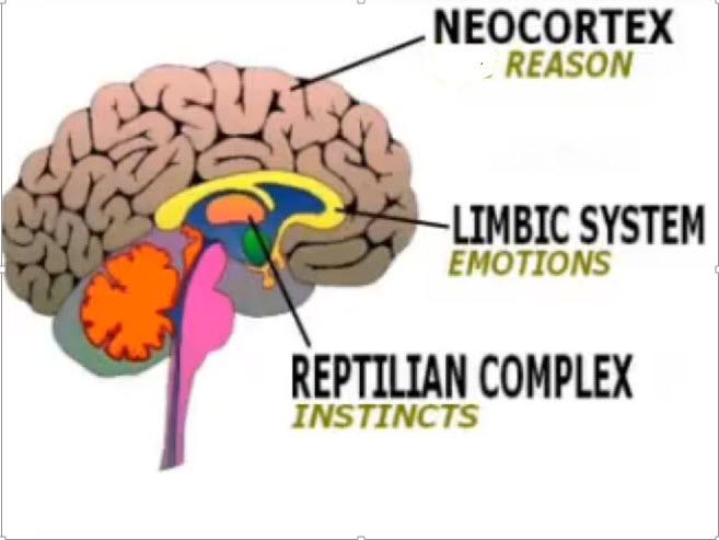 Turner_Brain_Diagram_EzineJuly2016