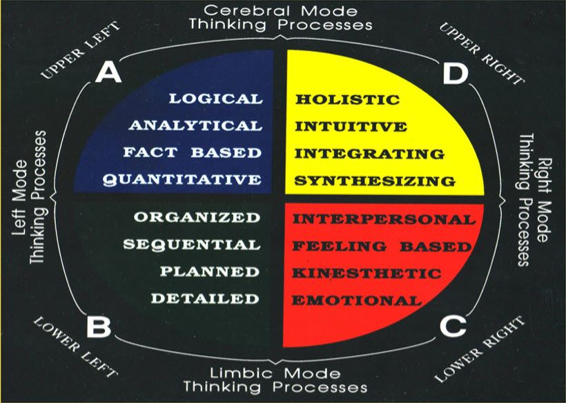 four-quadrant-model-of-the-brain